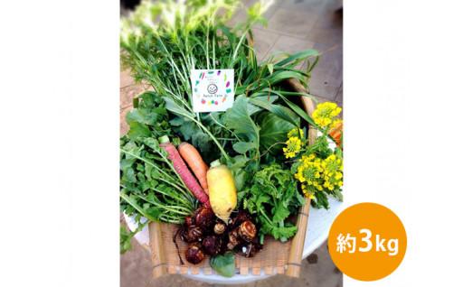 採れたて野菜を畑から直送「旬彩野菜バスケット」