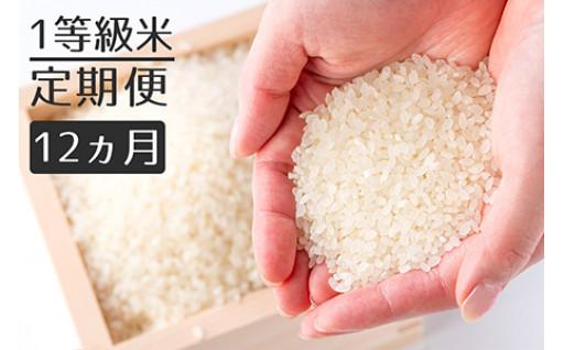 【定期便】1等級米 ヒノヒカリ 無洗米
