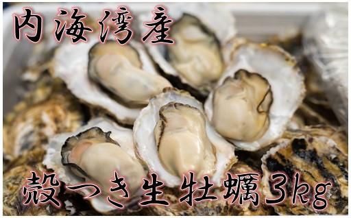 【予約受付中】大人気!殻つき生牡蠣3㎏!
