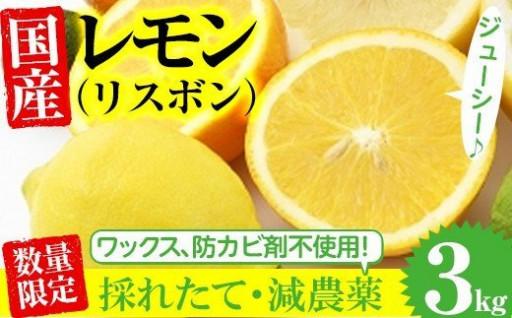 数量限定!採れたて!ミカン科の国産レモン3kg!
