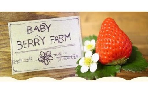 幸せの味!BabyBerryFarmのいちご