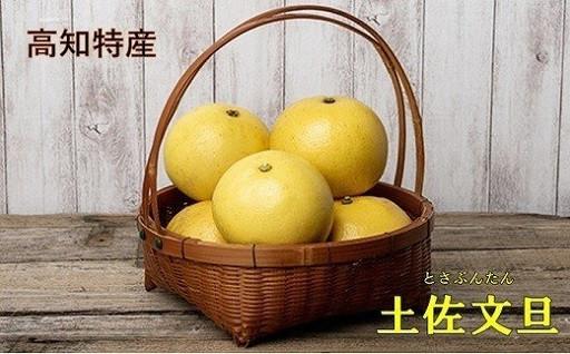 楽木工房の土佐文旦(ご家庭用)10kg/L・2L