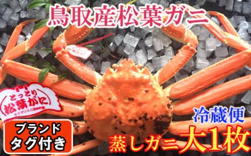鳥取県産タグ付き松葉ガニ(大)