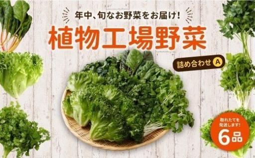 15-12 植物工場野菜 詰め合わせA
