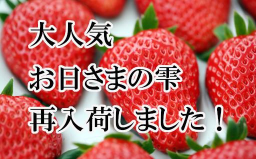 完熟いちご【お日さまの雫】再入荷!!