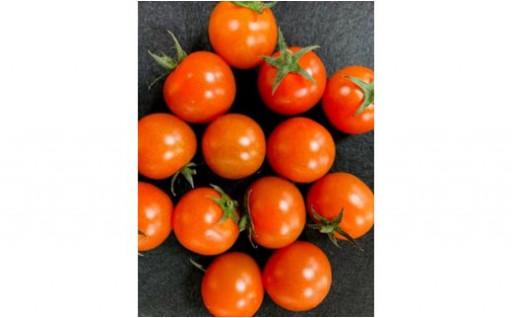 採れたてミニトマト(品種:千果)3㎏