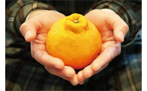 天草市の柑橘に仲間が増えました!