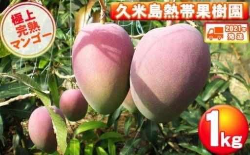 久米島熱帯果樹園 マンゴー1kg(2~3玉)