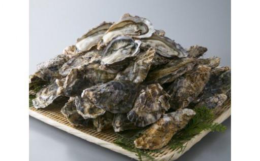 2月発送開始!小浜湾で育った牡蠣(殻付7㎏)