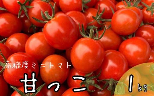 北海道中富良野産の高糖度ミニトマト《甘っこ》