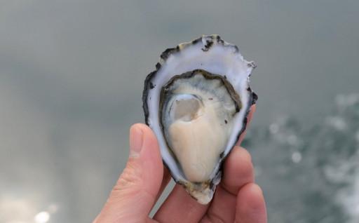 「大入島オイスター」約1.3kg(生食可)