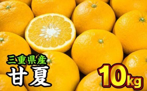 三重県産 サンフルーツ(甘夏) 10kg