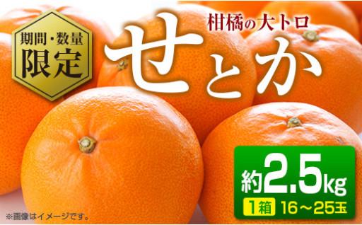 先行予約受付開始!大人気★柑橘の大トロ『せとか』