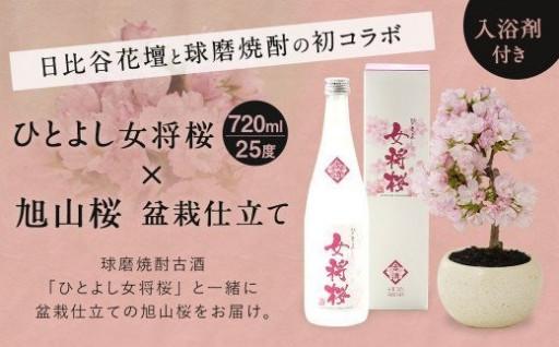 旭山桜と球磨焼酎で素敵な花見時間を
