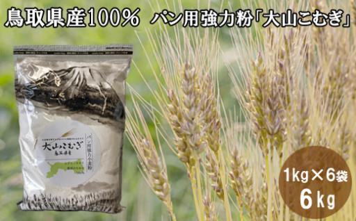 国産「鳥取県産100%」のパン用強力粉登場!
