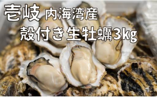 ◆期間限定◆殻付き生牡蠣3㎏!