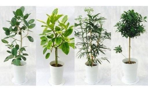 ~プロが選ぶ観葉植物で素敵なおうち空間を~
