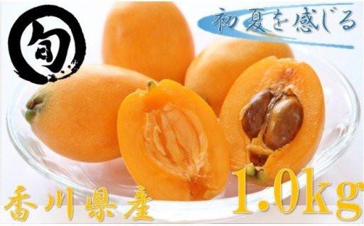 初夏を感じる果物 香川県産びわ 1.0kg