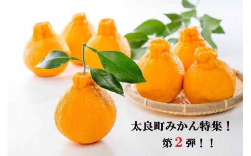 太良町のみかん特集!!爽やかな柑橘をお届け!!
