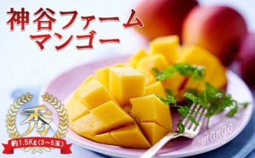 【2021年発送】神谷のマンゴー約1.5Kg 秀