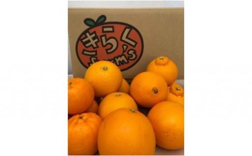 ★喜楽farmsから園主のおすすめ柑橘をお届け★