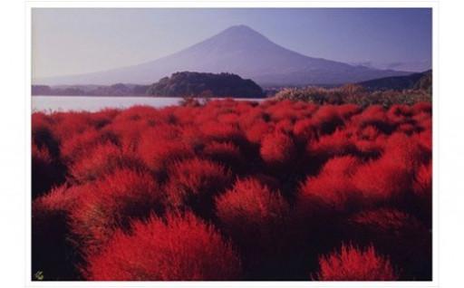 富士山額装写真「爽秋の湖畔 河口湖大石公園」
