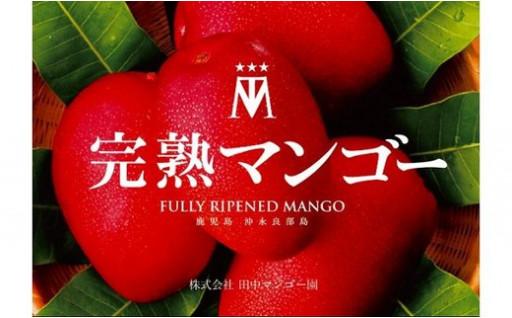 完熟アップルマンゴー 4~8玉で2kg