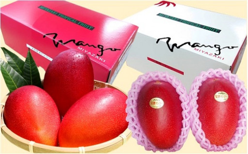 ギフトに最適!綾町産完熟マンゴーを化粧箱入りで!