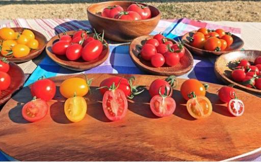 産地直送!新鮮トマト 食べ比べセット3kg
