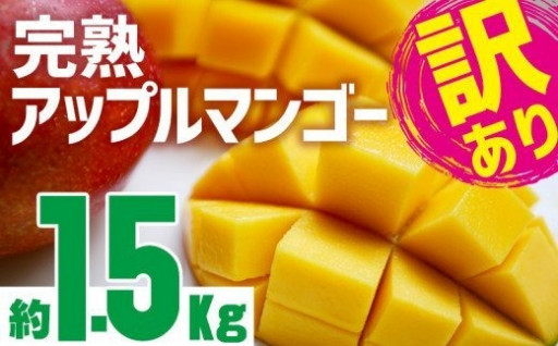 訳あり 沖縄市完熟アップルマンゴー約1.5kg