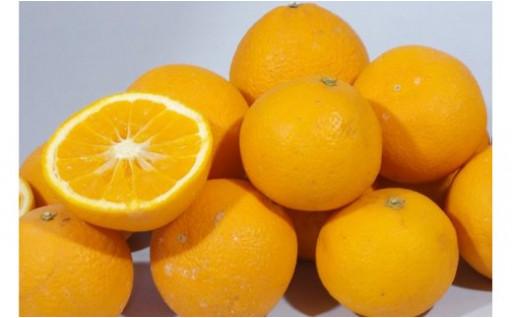 ★蛍飛ぶ里からお届け きよみオレンジ5kg★