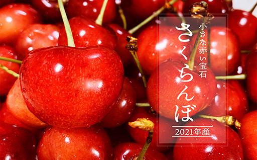 【先行受付】赤い小さな宝石 初夏の味さくらんぼ