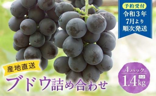 福岡県 広川産 ブドウ 約1.4kg