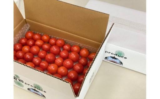安全で安心、おいしい自慢のトマトをどうぞ!