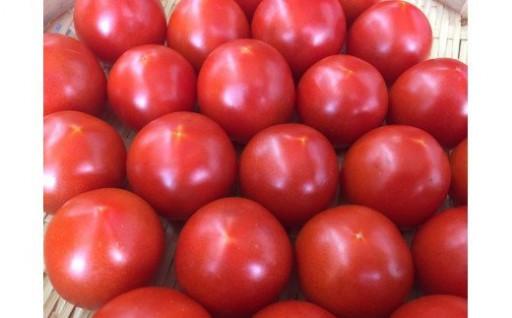 甘さのバランスが絶品のトマトをどうぞ!