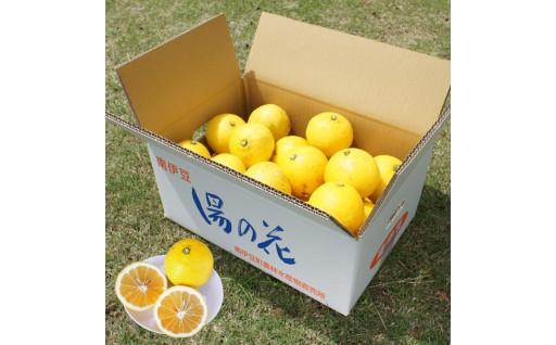 伊豆の香りニューサマーオレンジ 5kg箱セット