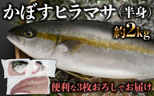 「うすき産かぼすヒラマサ」約2kg弱(半身)