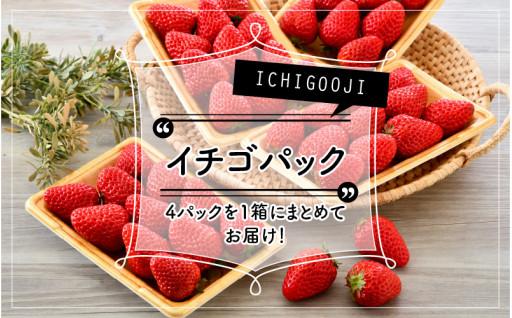 トキメキ☆ICHIGOOJIの朝摘みイチゴ