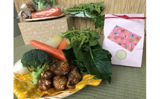 体が喜ぶ自然栽培で育てた旬の新鮮な野菜!