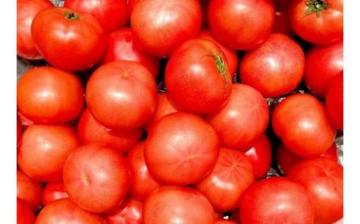大玉トマトの贅沢食べ比べセット(約4kg)