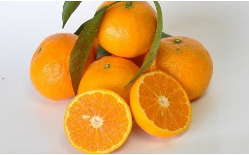まもなく出荷!希少な柑橘「南津海(なつみ)」