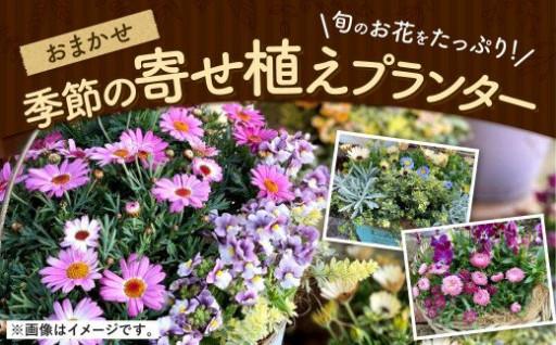 おまかせ 季節の寄せ植え プランター 1鉢