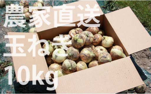 農家直送!佐賀県産玉ねぎ(10kg)