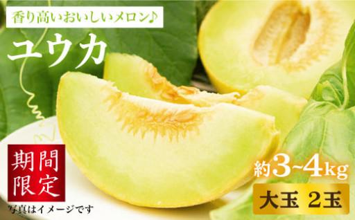 【香り高い】大島メロン「ユウカ」大玉2玉