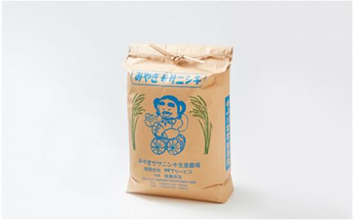 産地精米ササニシキ10kg