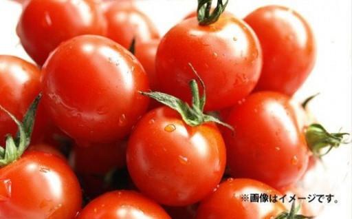 訳アリ 特盛ミニトマト3kg 熊本県産