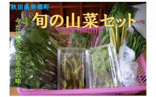 【春限定】旬の山菜セット