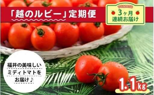 5月スタート定期便!完熟トマト「越のルビー」!