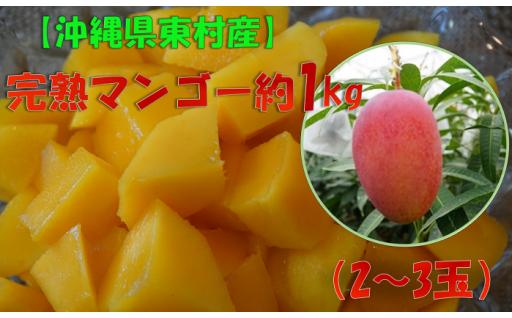 眞ちゃん自慢の完熟マンゴー約1㎏(2~3玉入り)