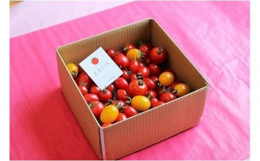 ドロップファームの美容トマト1kg箱